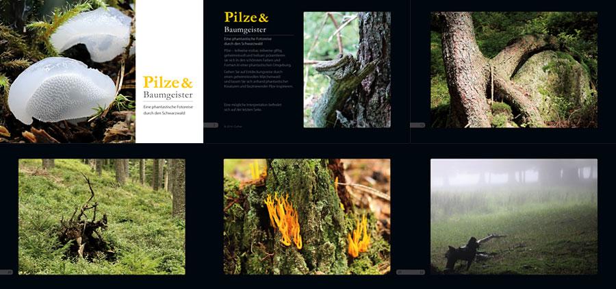 Pilze und Baumgeister im Schwarzwald